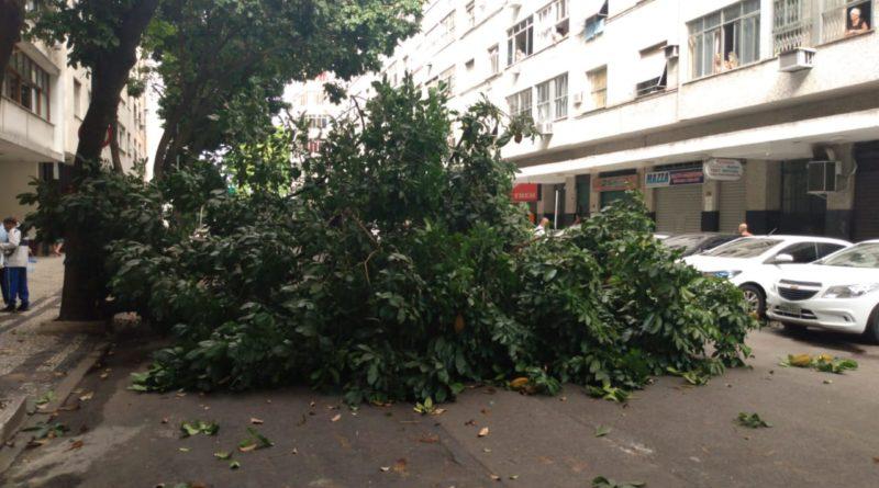 Árvore Flamengo