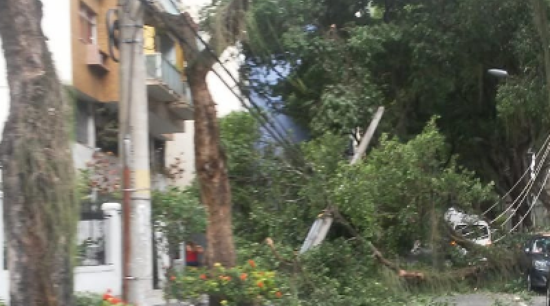 Árvore na Tijuca